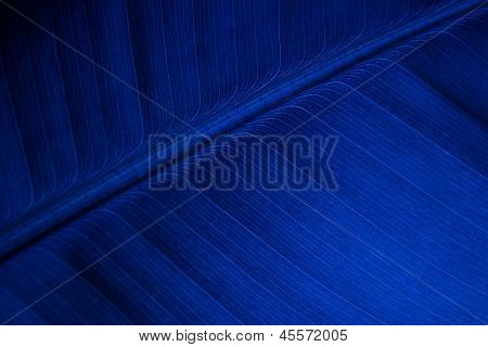 Blue Banana Leaf