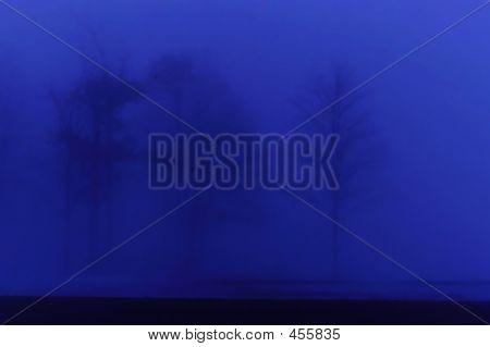 Blue Trees In Mist