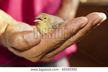 Small Tropical Bird