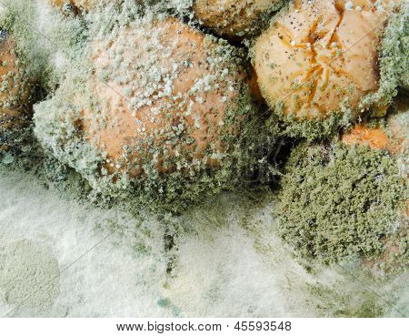 Mould On Apples