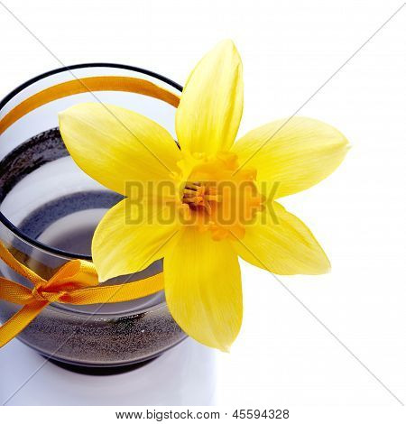 Narcissus Flower In A Vase With A Tape.
