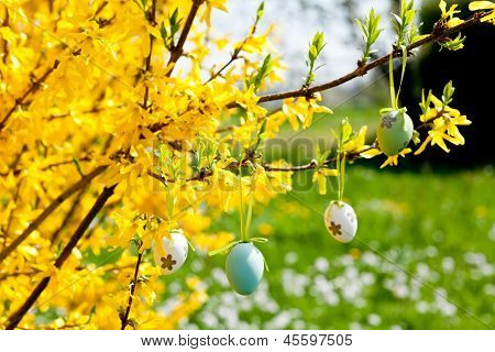 Easte Egg And Forsythia Tree In Spring Outdoor