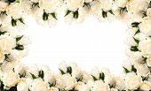 stock photo of white roses  - white rose border with space for your text - JPG