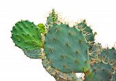 image of thorns  - Green Cactus with thorn isolated on white background - JPG