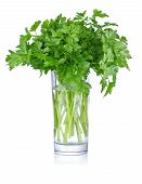 stock photo of tumblers  - fresh bunch parsley in glass isolated on white background - JPG