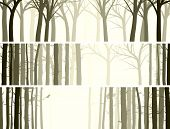 picture of coniferous forest  - Vector abstract horizontal banner with many tree trunks  - JPG