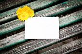 Blank Card With Dandelion