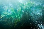 stock photo of cenote  - Ferns seen from underwater with sunrise  - JPG