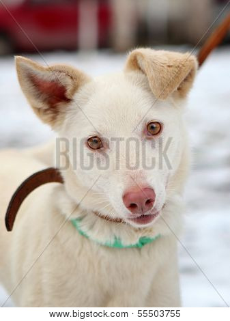 Young white dog on winter outdoors