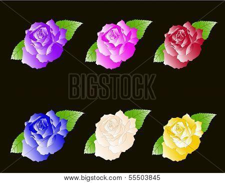 Set of Six Roses
