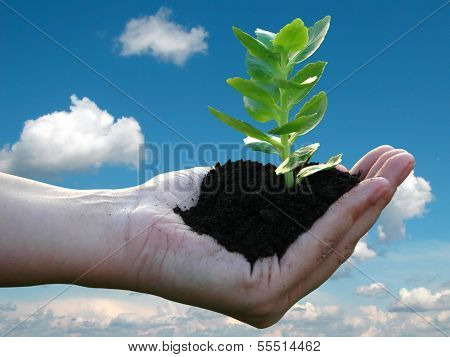 Green plant in a woman's palm