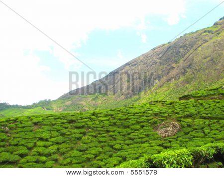 Verde montaña rocosa