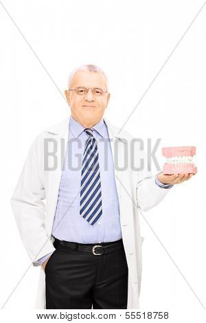 Mature male dentist holding a teeth sample made out of plaster cast isolated on white background
