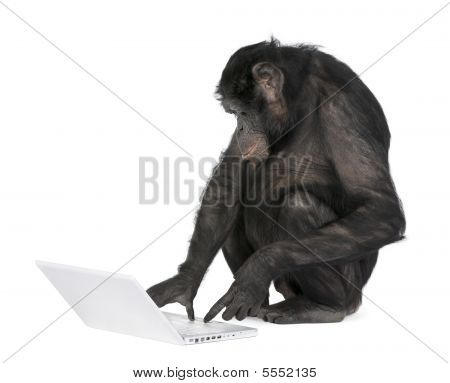 Monkey Playing With A Laptop