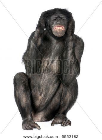 Crazy Monkey Screaming
