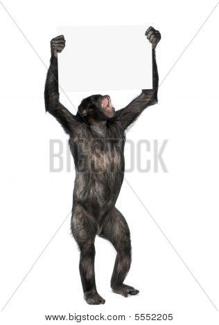 Protesting Monkey