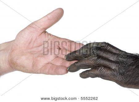 Human And Monkey Joining Hands