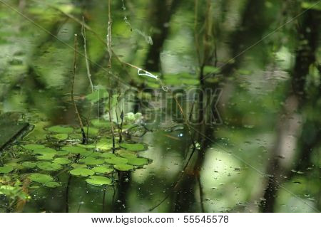 Rainy green water