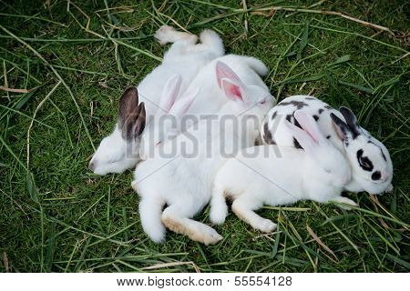 Cute Baby Rabbits Are Sleeping.