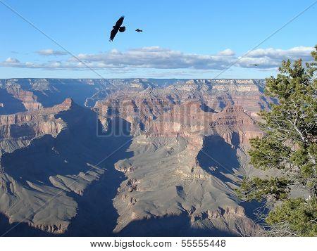 Raven over Grand Canyon