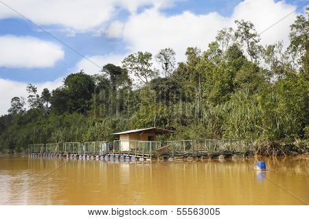 Jungle River Prawn farm