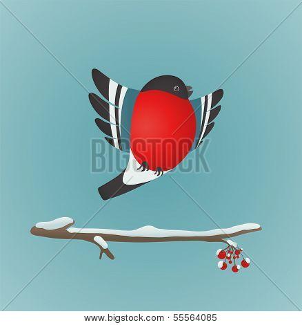 Bullfinch Flying and Ashberry Twig