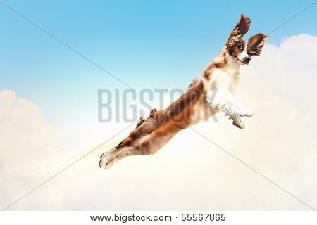 Basset hound flying between the clouds in the sky. funny collage