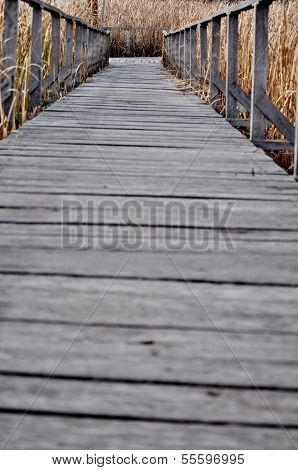 Path Covered By Wood