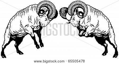 Two Fighting Rams Black White
