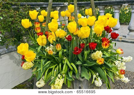 Tulips and hyacinths.
