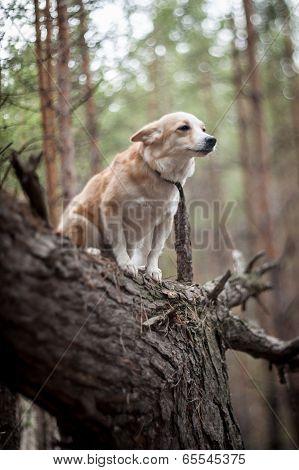 Dog On A Tree.