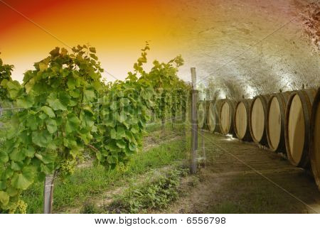 Wine Cellar And Winery