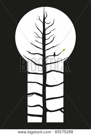 Keyhole Tree