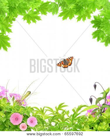 Summer frame with green maple leaves, flowers and insects. Isolated on white background