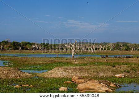Landscape of Yala national park in Sri Lanka