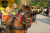 picture of carriage horse  - the Carriages and horses in Lampang Thailand - JPG