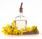 picture of rape-seed  - Isolated rape oil with blossoms on white background - JPG