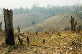 pic of slash  - Slash And Burn Cultivation - JPG