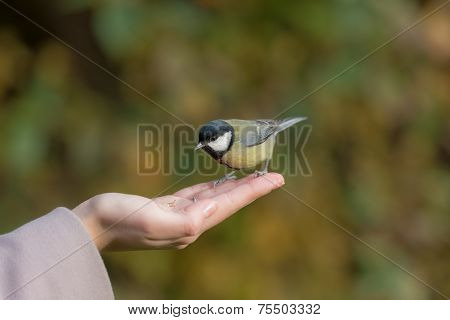 Tit On Palm