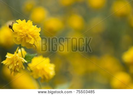 Yellow Spring Flowers With Blurred Background