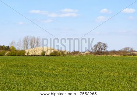 Wheatfield With Flowering Blackthorn