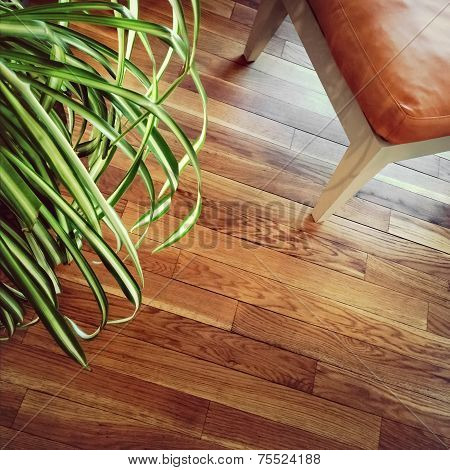 Chair And Plant On Wooden Floor