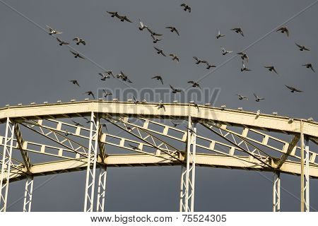 Pigeons Taking Off From The Bridge
