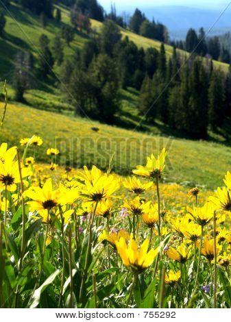 Flowers on a hillside