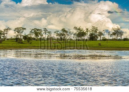 Amazing landscape in Pantanal, Brazil. Pantanal is one of the world's largest tropical wetland areas located in Brazil , Latin America