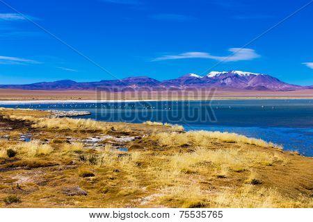 Salar Tara with a wonderful lagoon and vulcano