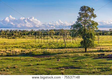 Pantanal landscape