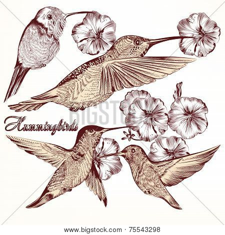 Collection Of Vector Hand Drawn Hummingbirds For Design