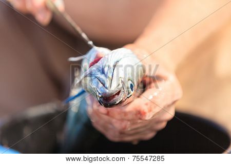 Saltwater Fishing - Man Cleaning Fish Outdoor