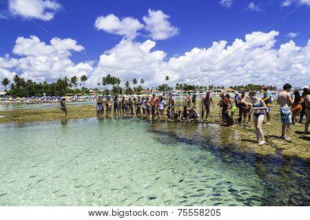RECIFE, BRAZIL - CIRCA JAN 2014 - Tourists enjoy the Barrier reef tour in Porto de Galinhas, Recife, Pernambuco - Brazil